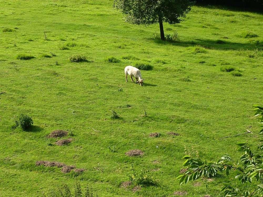 Mes 5 shets dans la prairie des moutons. 00111