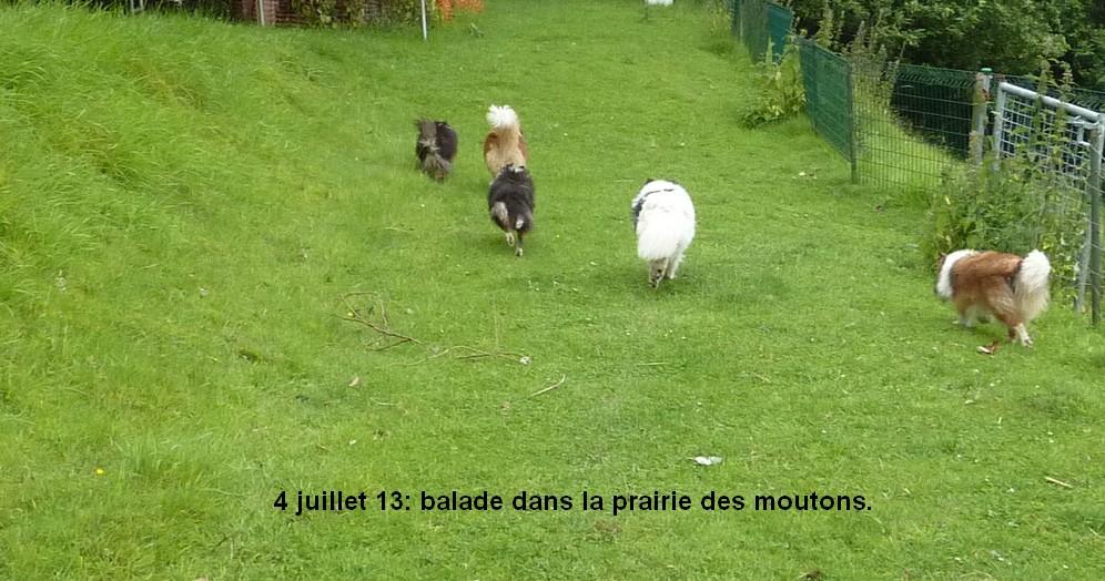 Mes 5 shets dans la prairie des moutons. Les_5_10