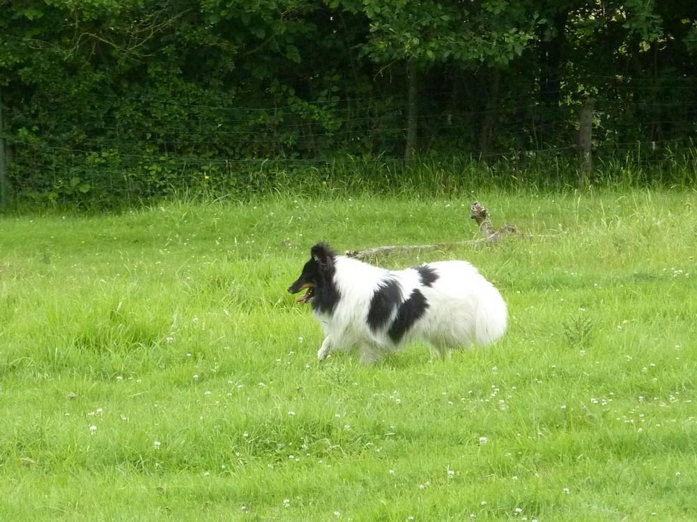 Mes 5 shets dans la prairie des moutons. Les_5_25