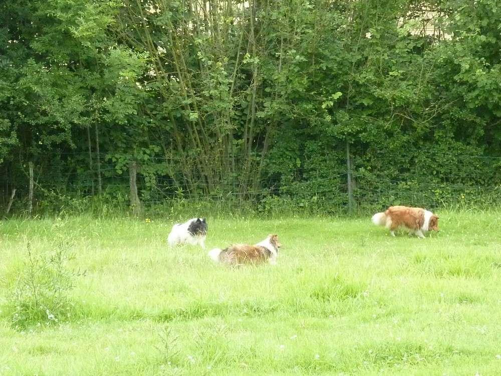 Mes 5 shets dans la prairie des moutons. Les_5_28