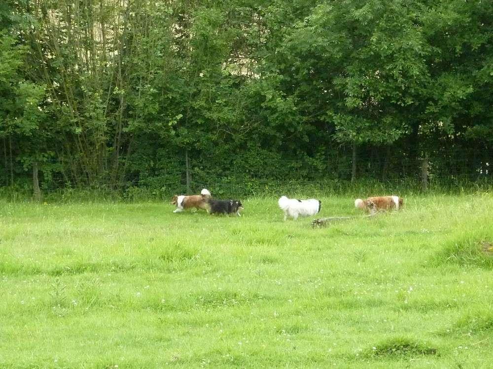 Mes 5 shets dans la prairie des moutons. Les_5_29