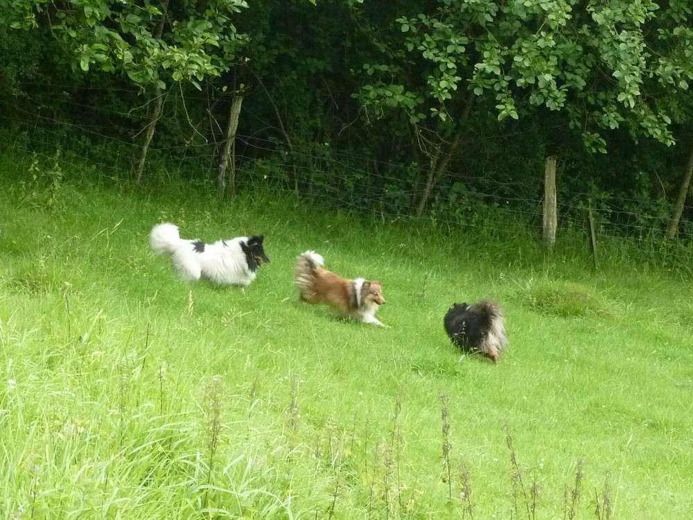 Mes 5 shets dans la prairie des moutons. Les_5_36