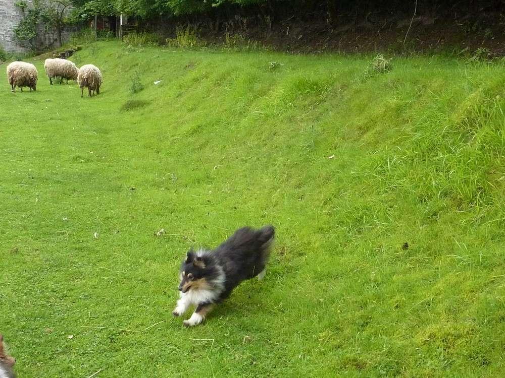 Mes 5 shets dans la prairie des moutons. Les_5_47