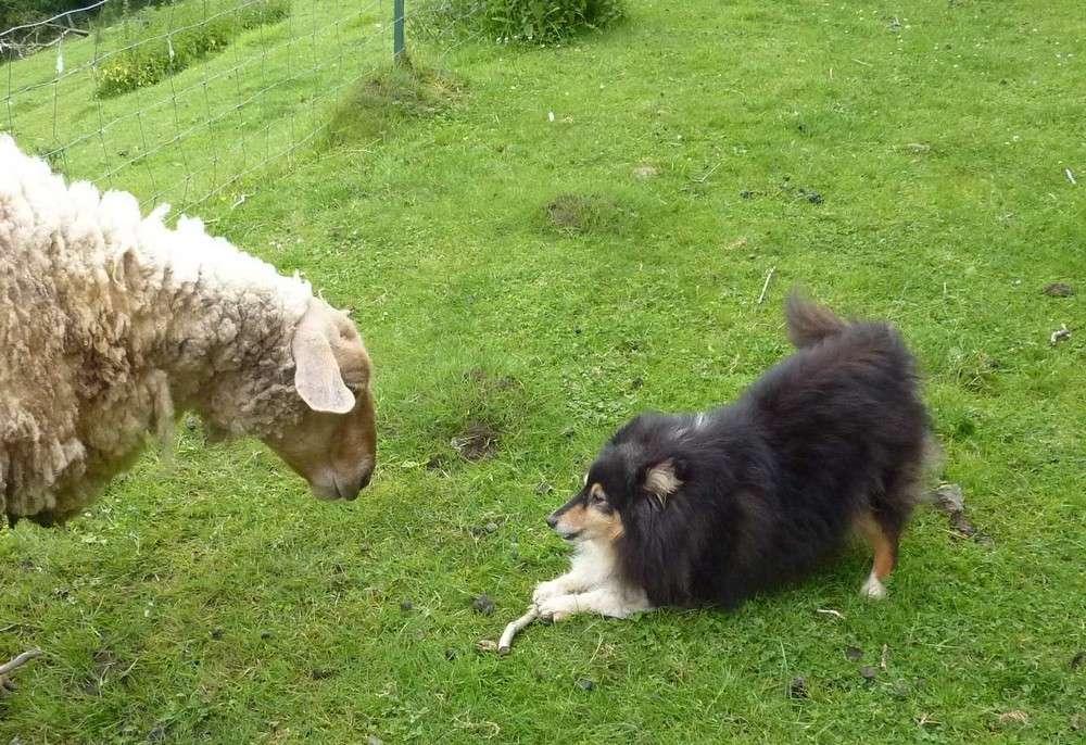 Mes 5 shets dans la prairie des moutons. Les_5_50