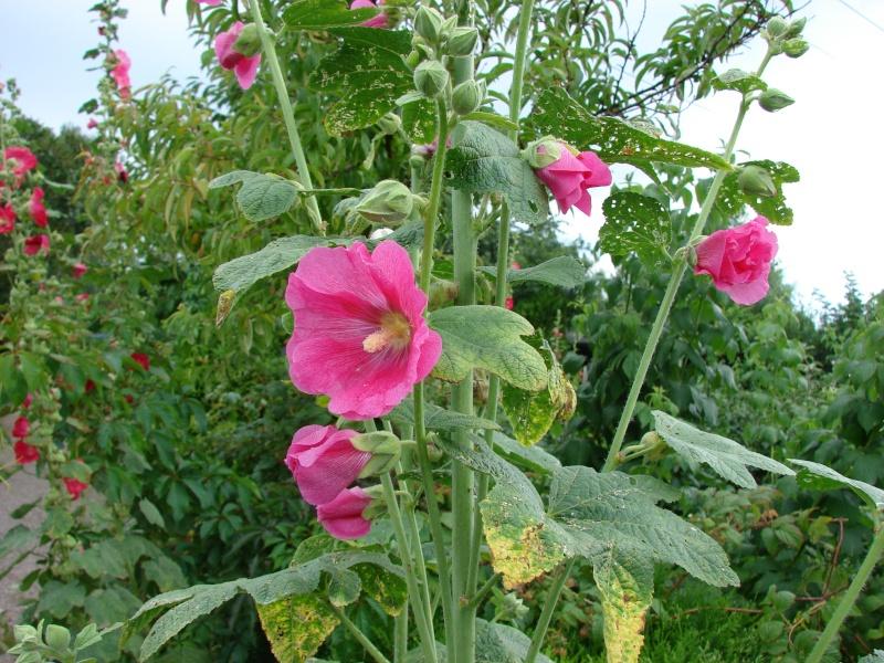les petites fleurs que nous aimons!!!allé zou, c'est ici!!!! Dsc01225