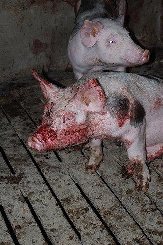 LA cruauté des animaux  35320_10