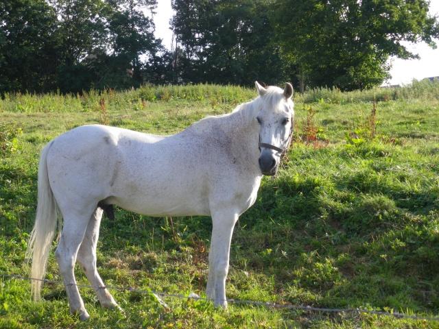 (placement via autre association) hongre gris 12 ans 600 euros Imgp0117