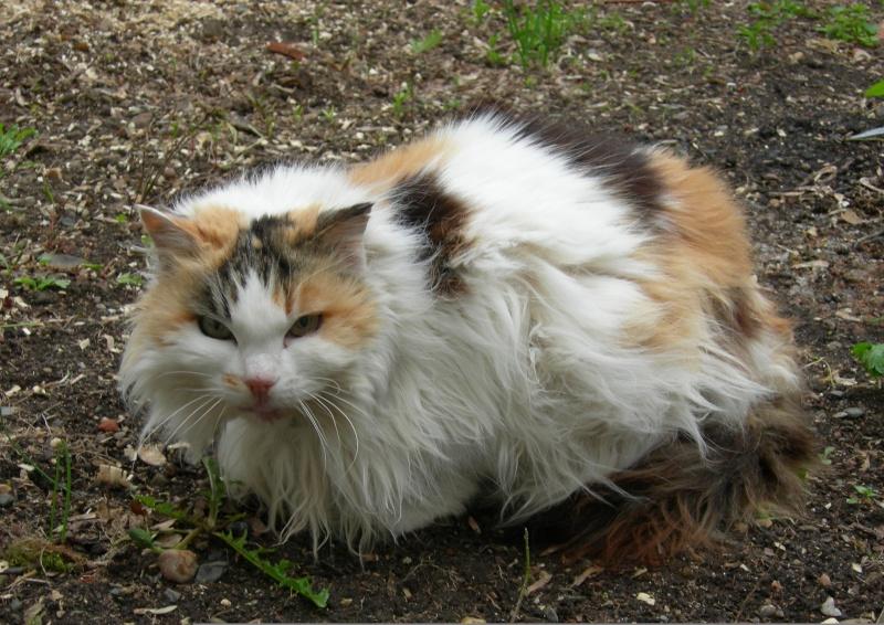 Clarisse, 16 ans Claris10