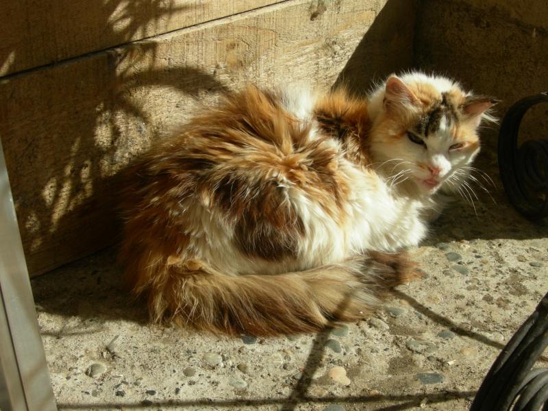 Clarisse, 16 ans Dscn2011