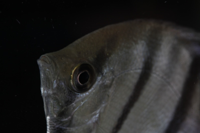 Voyage au Pérou (croisière aquario solidaire 2012)  43110