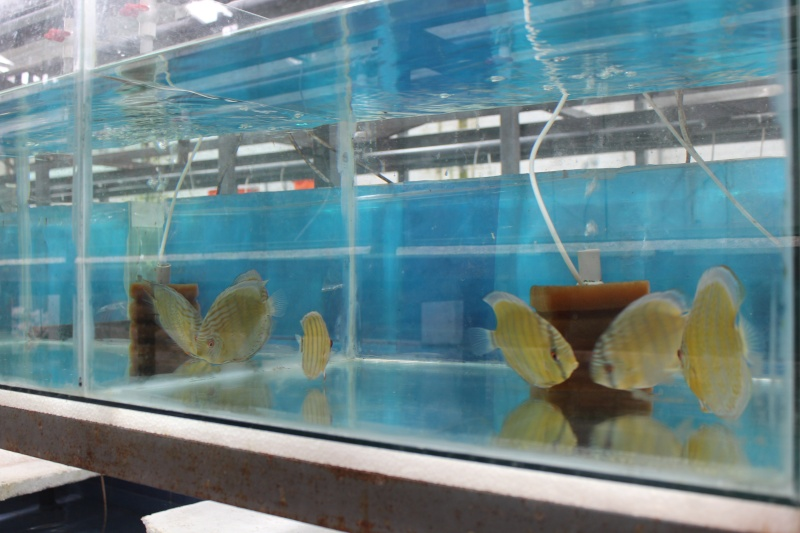 Voyage au Pérou (croisière aquario solidaire 2012)  Img_0611