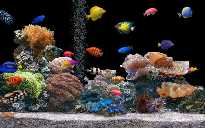 Vivre en harmonie Aquari10