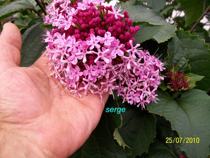 arbustre a fleurs 100_3323