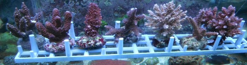 Arrivage coraux reeflab Arriva10