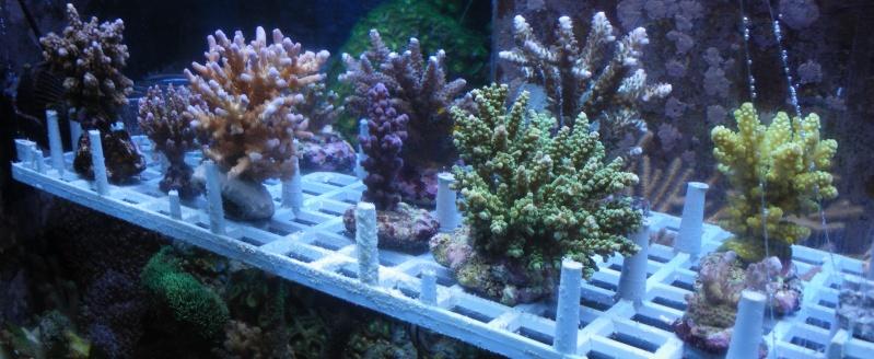 Arrivage coraux reeflab Arriva11