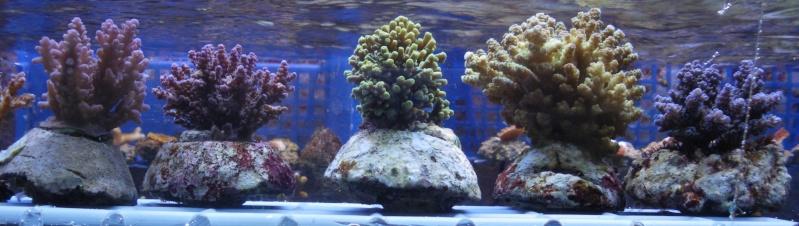 Arrivage coraux reeflab Arriva12