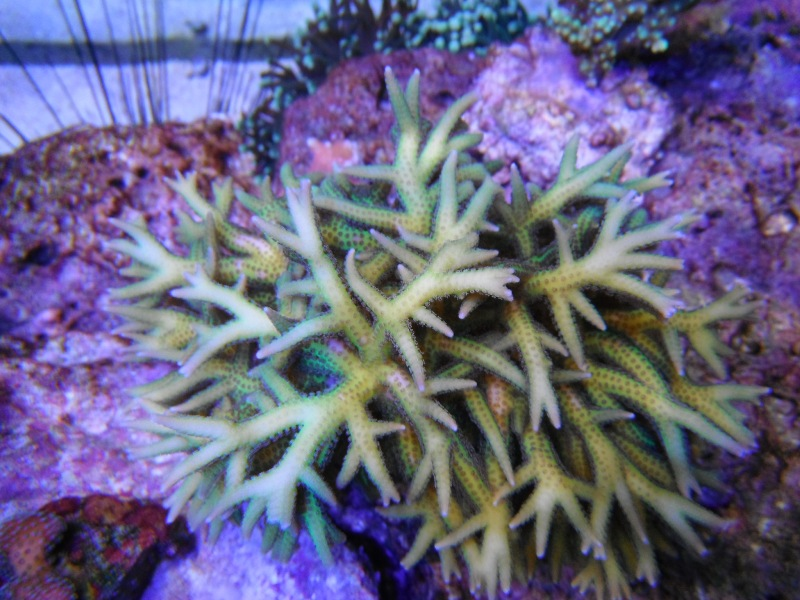 Photos du bac de DenisLuc (25.08.2012) Deniso21