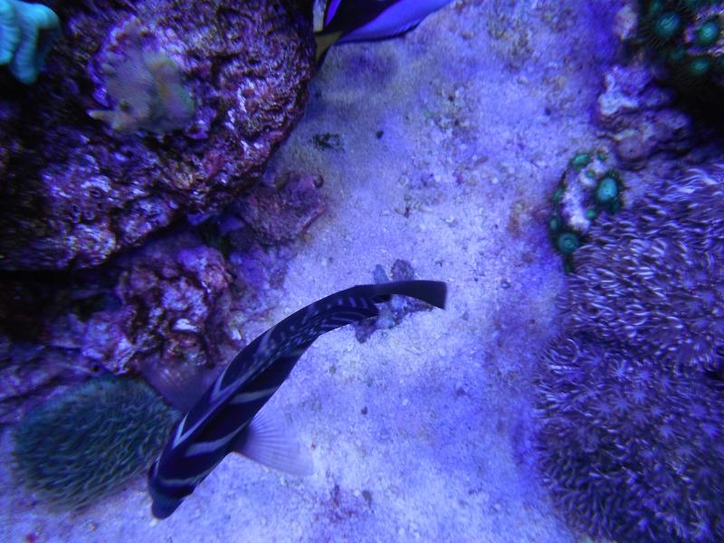 Photos du bac de DenisLuc (25.08.2012) Deniso26