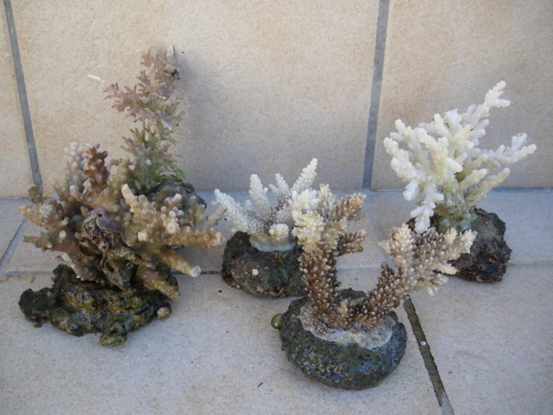 Arrivage coraux reeflab Imgp0319