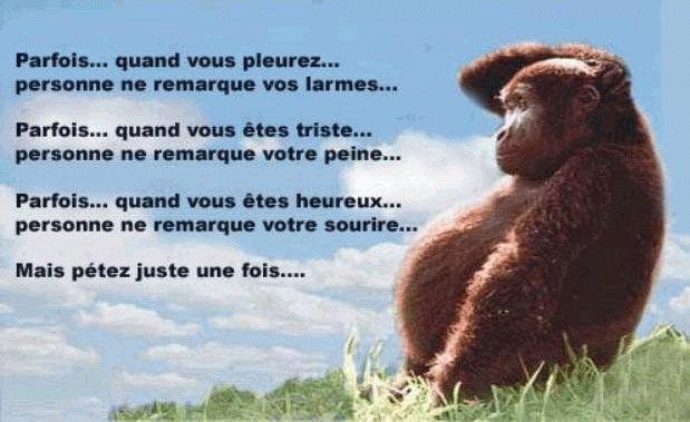 LA PHOTO DU JOUR: - Page 2 1271810