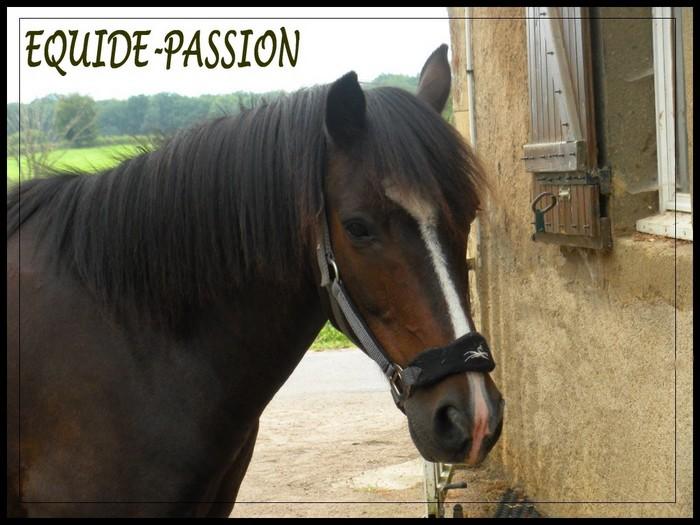 Equidé-passion
