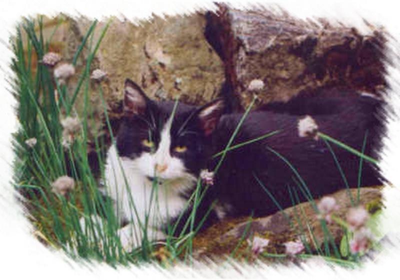 Chatte des villes et chat des champs (extraits) Orca_110