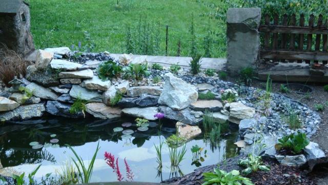 Mon jardin en construction Dsc01317