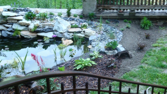 Mon jardin en construction Dsc01319