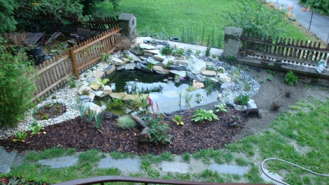 Mon jardin en construction Dsc01320