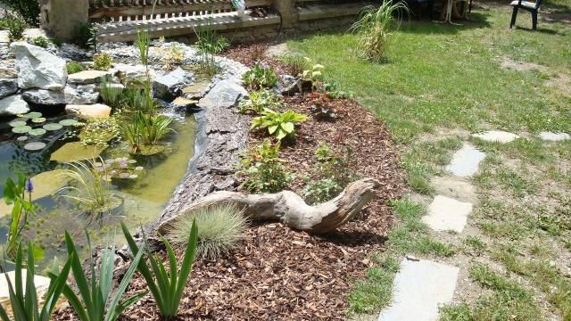 Mon jardin en construction Dsc01324