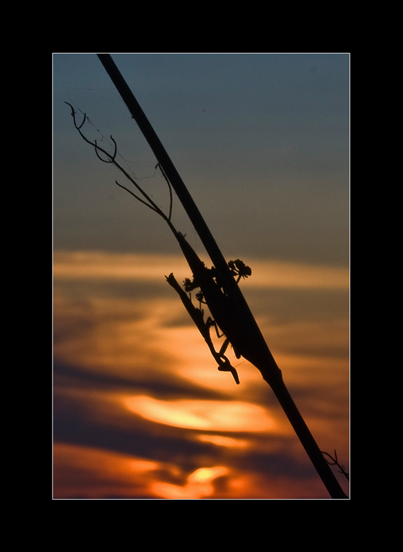 Coucher & Lever de soleil - Page 2 Img_9611