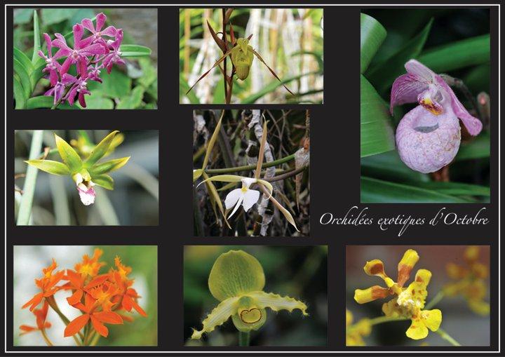 Guide des orchidées chaudes. Orchi10