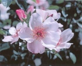Le YOGA Fleur_11