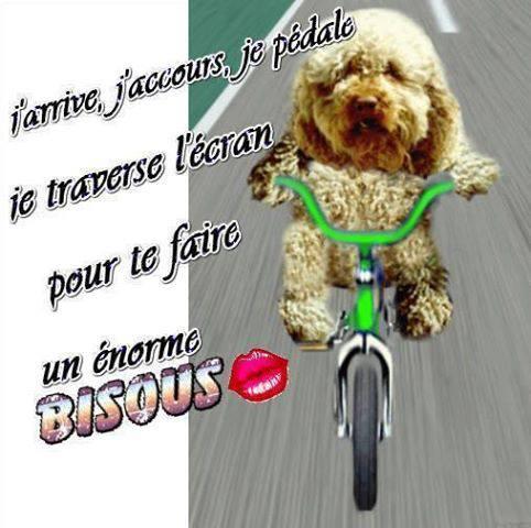 Bon anniversaire Jacotte... 10005010