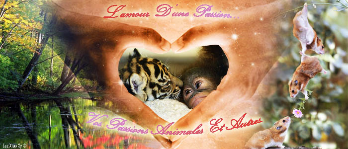 Vos Passions Animales & Co'