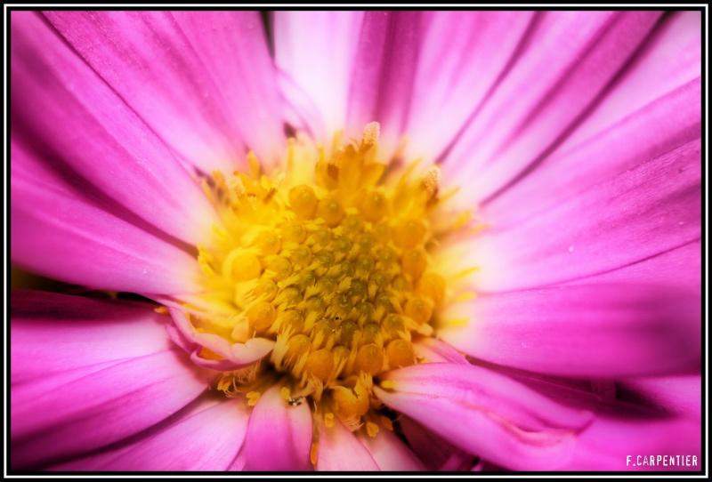Fleur avec traitement HDR Fleur-10