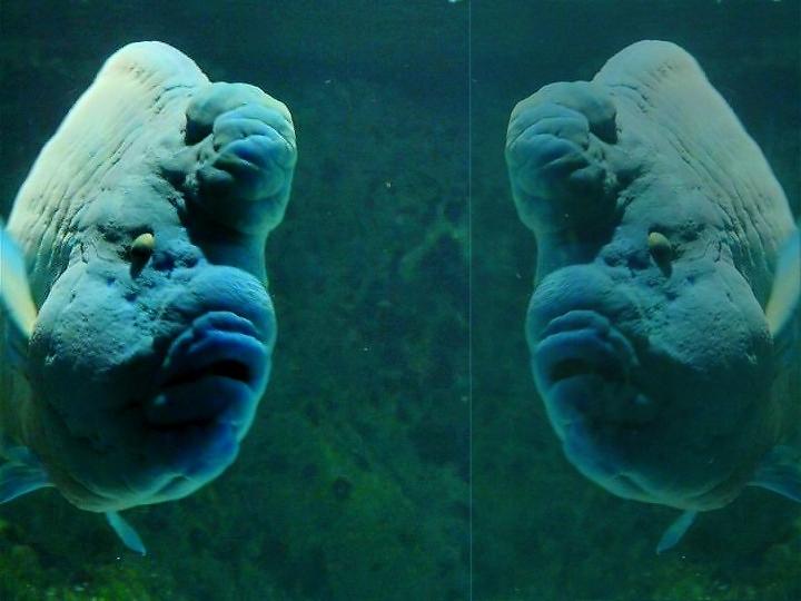 aquarium de la Rochelle 08090910