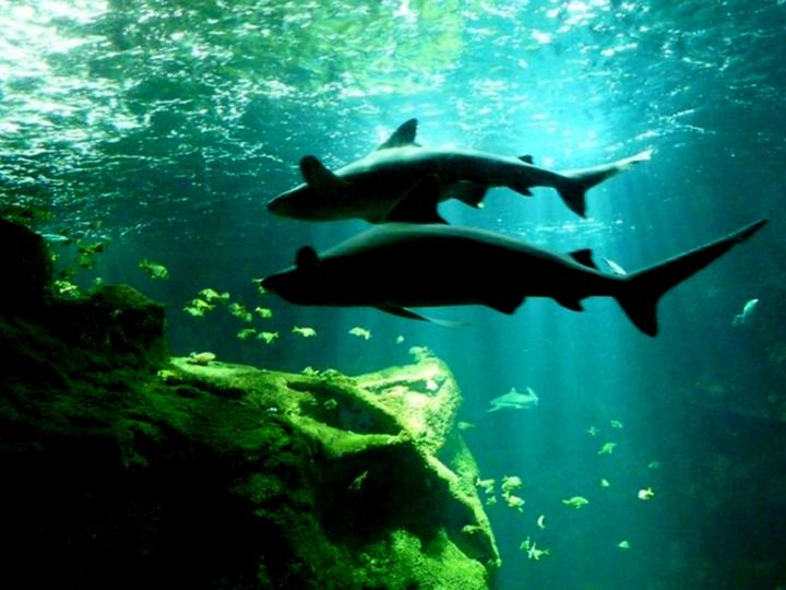 aquarium de la Rochelle 08090911
