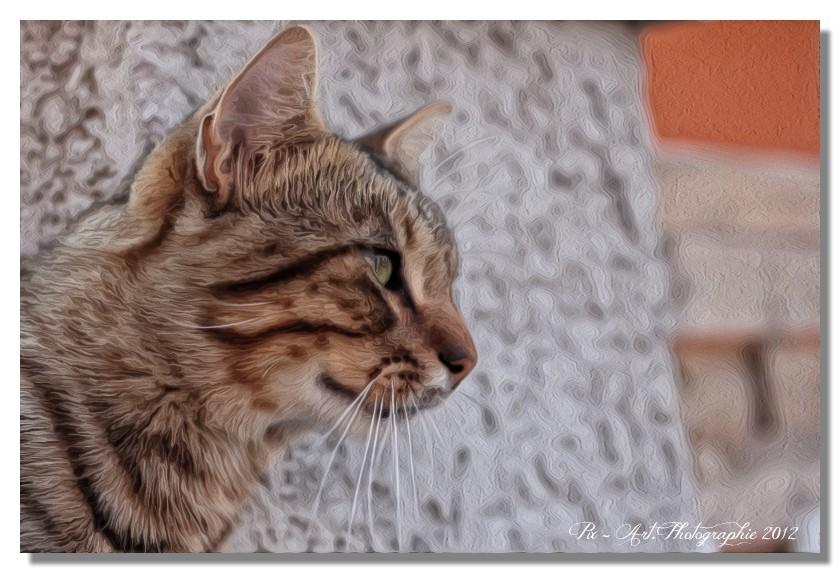 Le fil du chat - Page 6 Pma28012