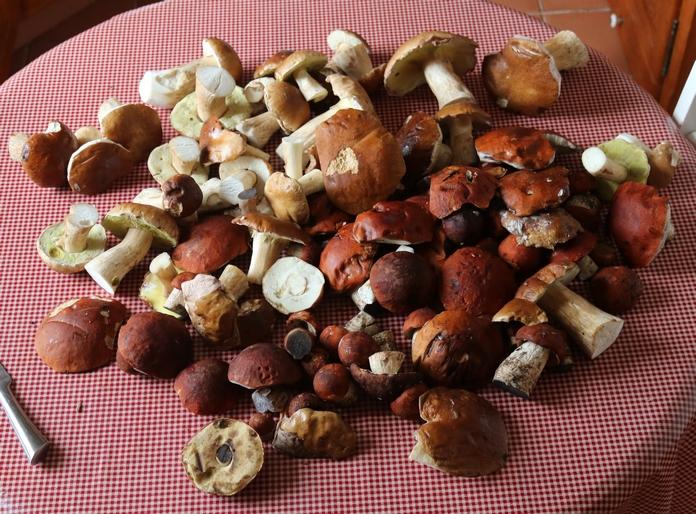 Pour rebondir sur le post champignon de pierre Michel  Img_5011