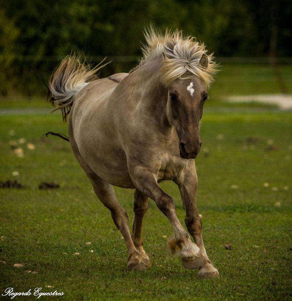 highland silver grullo  64736410