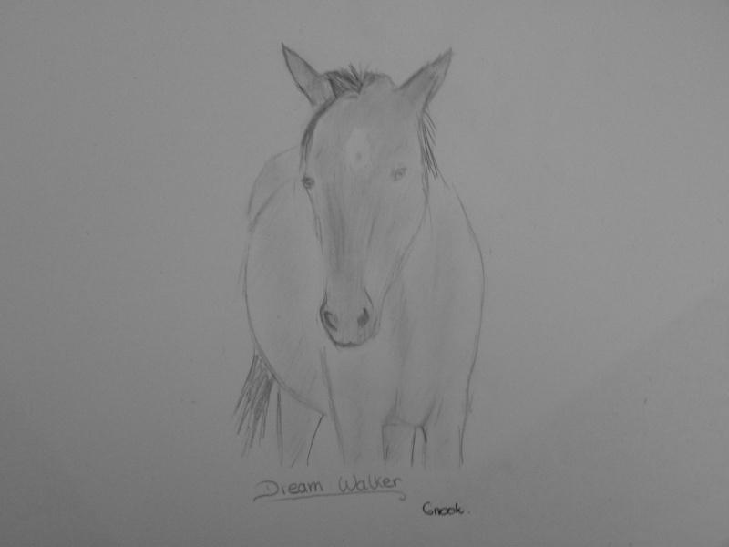 Propose de dessiner gratuitement vos chevaux !  P1030710
