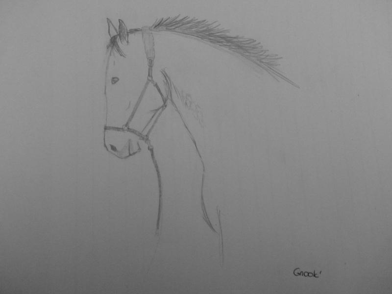 Propose de dessiner gratuitement vos chevaux !  P1030711