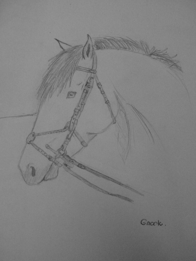 Propose de dessiner gratuitement vos chevaux !  P1030712
