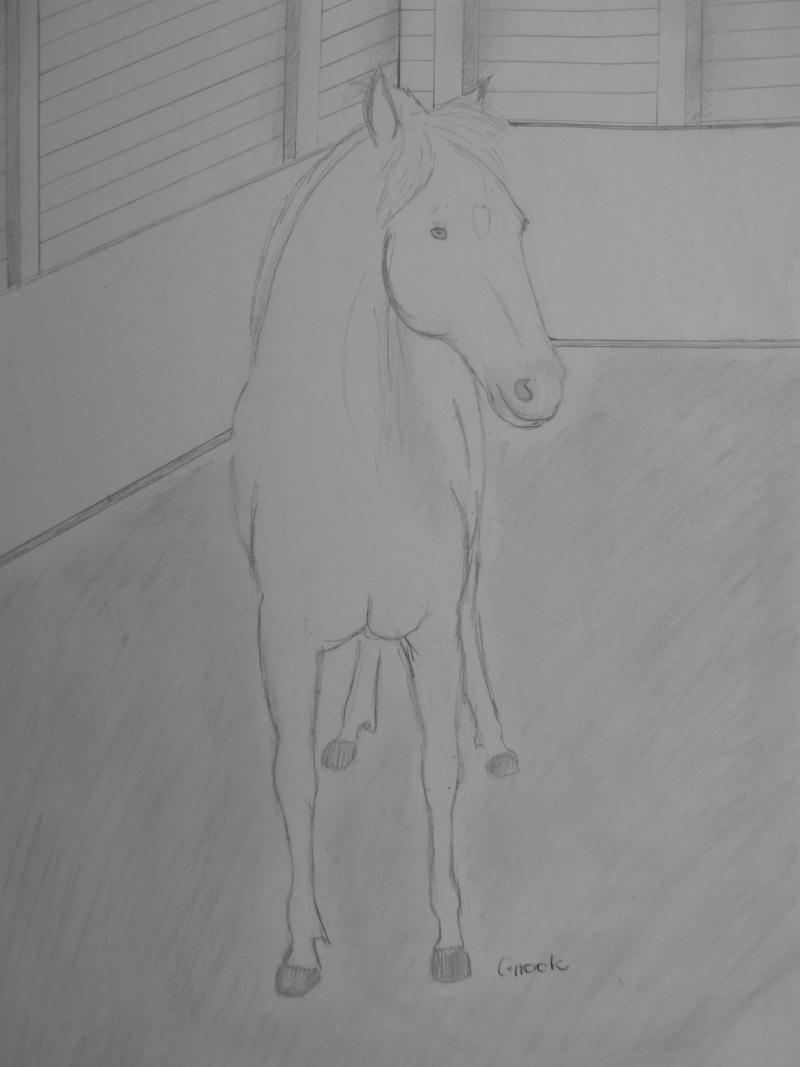 Propose de dessiner gratuitement vos chevaux !  - Page 2 P1030715