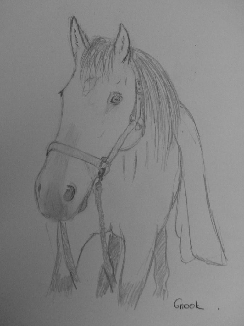 Propose de dessiner gratuitement vos chevaux !  - Page 3 P1030719