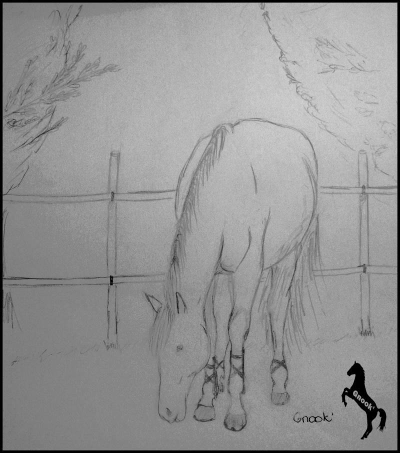 Propose de dessiner gratuitement vos chevaux !  - Page 3 P1030720