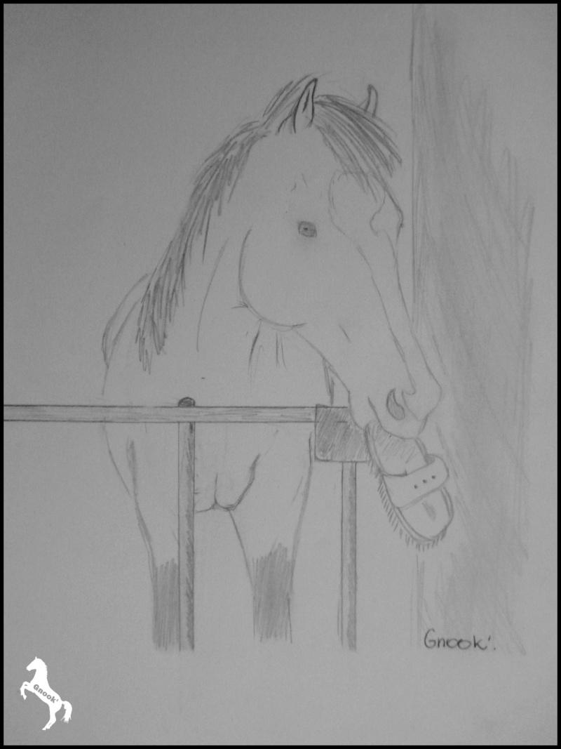 Propose de dessiner gratuitement vos chevaux !  - Page 4 P1050010