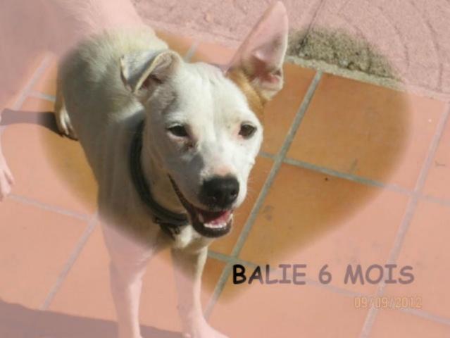BALI, 8 MOIS, X DOGUE ADOPTEE PAR DENISA (93) -R-LBC-VV-SC-F   AR Balie10