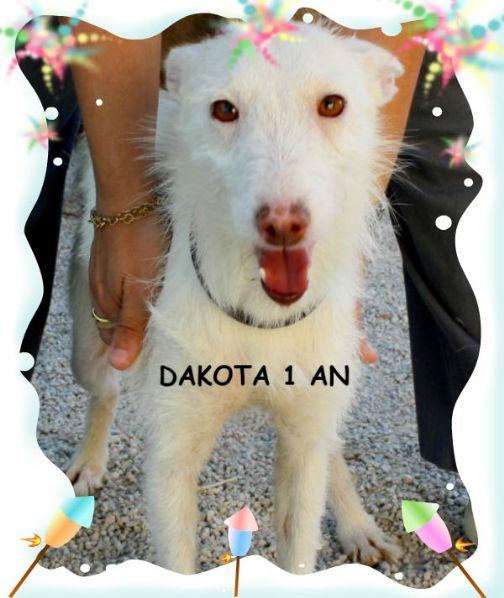 DAKOTA, 1 AN, SOEUR DE COYOTE A L'ADOPTION (ES)-R-VV-SC-  LBC F  Dakota10